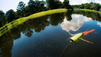 Dating pond