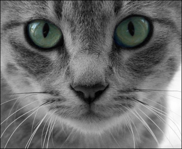 This is not my cat, as far as I know. But it looks just like him. Just like that very bad cat.