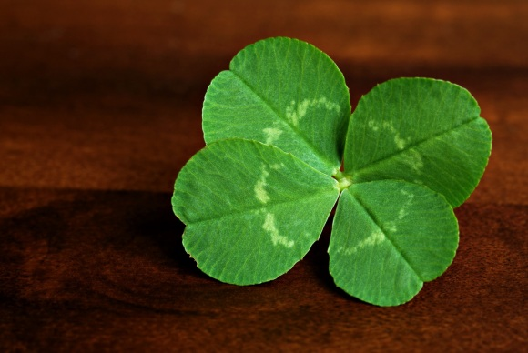 A four-leaf clover is easier to find than you think. You just need to be prepared.