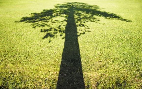 (Image/nature.com)